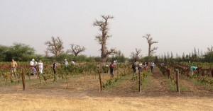 4666390_3_89b2_le-clos-des-baobabs-au-senegal-le-21-avril-2_6bc251519ffd665ca05d3350d3db7aac