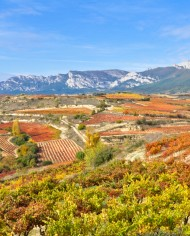 Vineyard at Autumn, Basque Country (Spain)